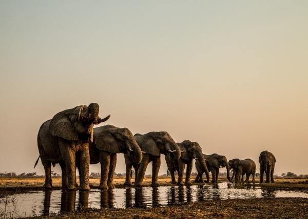 Okavango: Rijeka snova