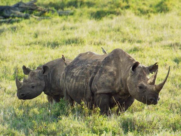 Deníky keňského života v divočině (3)