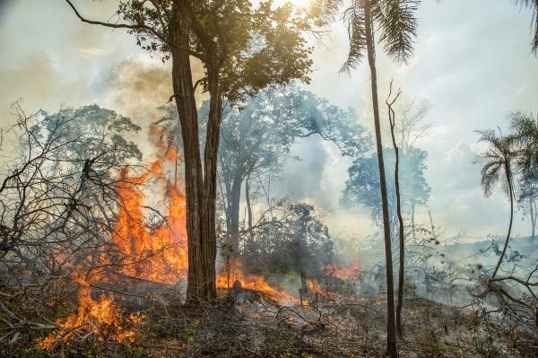 Po lesních požárech
