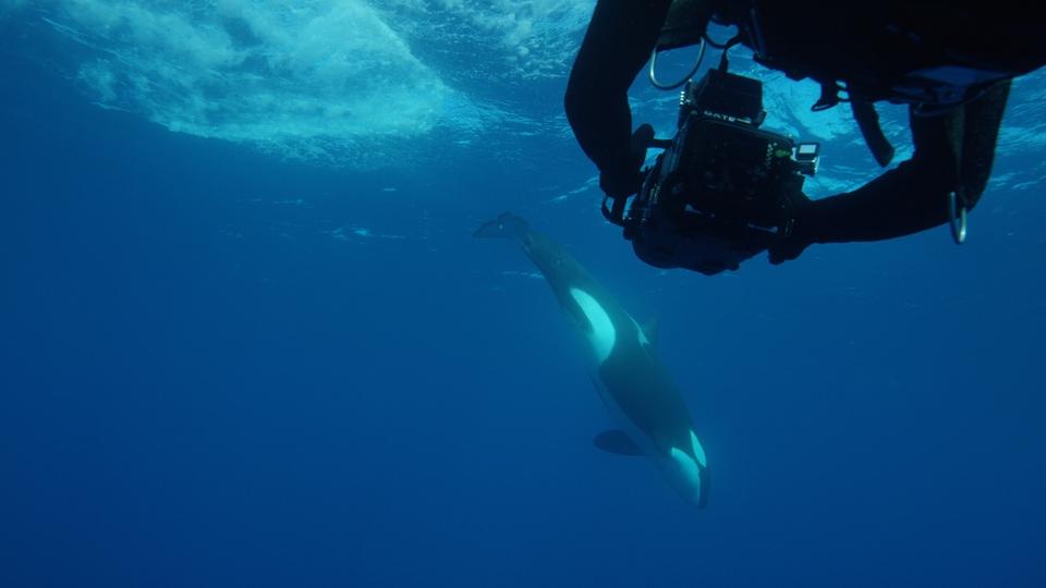 Documentary Žralok jako kořist