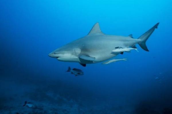 Najsmrtonosniji morski psi svijeta